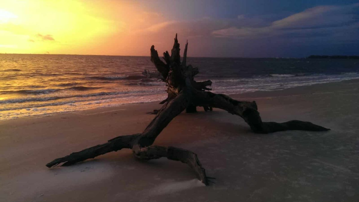 Sonnenuntergang am Driftwood Beach, Jekyll Island