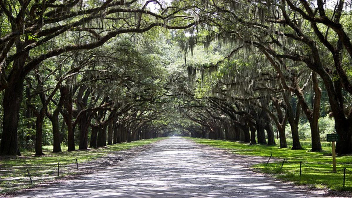 Allee in der Südstaatenstadt Savannah in Georgia