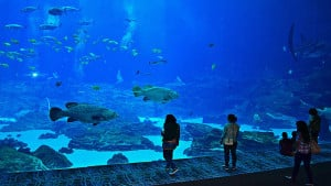 Bay Aquarium in Atlanta. (Bild: pixabay.com)