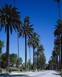 Beverly Hills mit seinen zahlreichen Palmen rechts und links an der Straße entlang.
