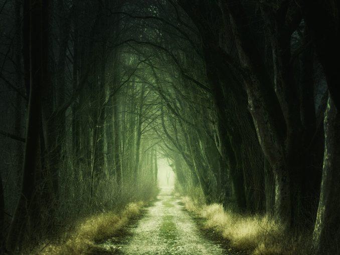 Düsterer Waldweg